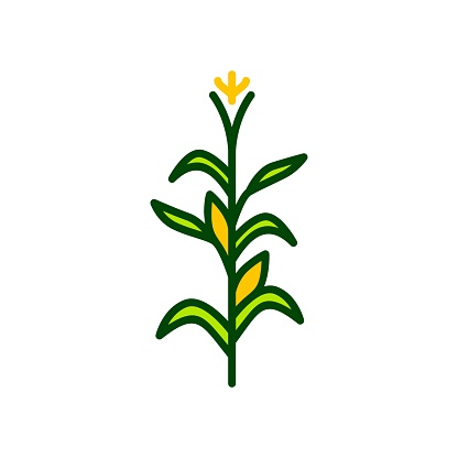 Corn Tree Vector Icon Illustration Color - Arte vetorial de stock e mais imagens de Agricultura