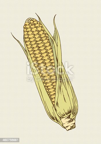 Vector illustration of corn. EPS8, AI10, high res jpeg included.