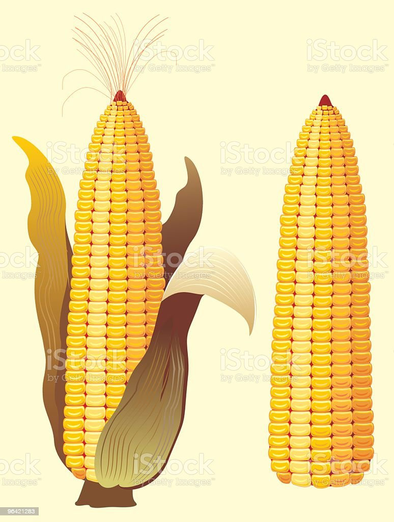 Corn royalty-free corn stock vector art & more images of cereal plant
