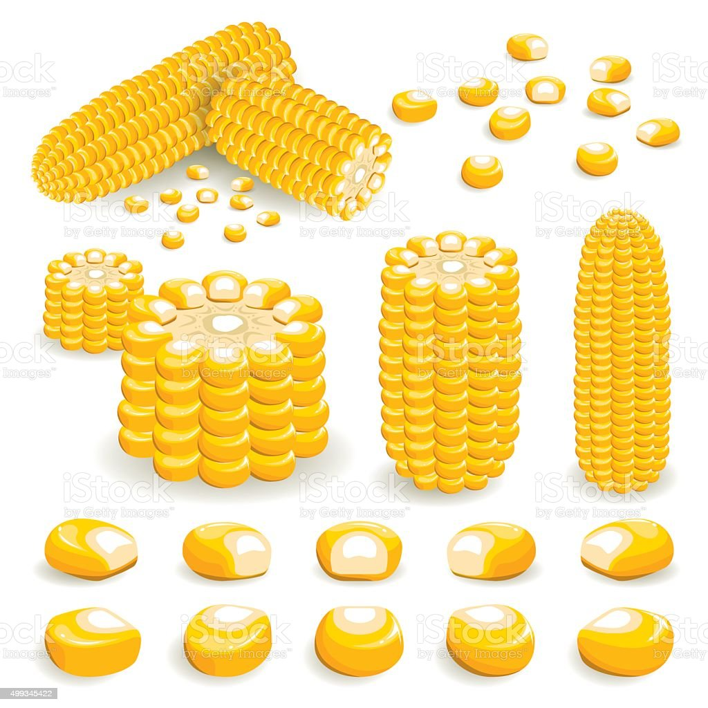 Corn Vector vector art illustration