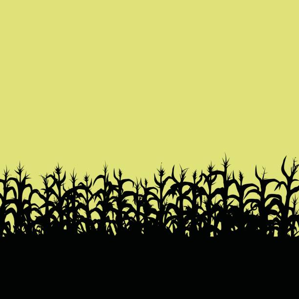 Cornfield vector art illustration