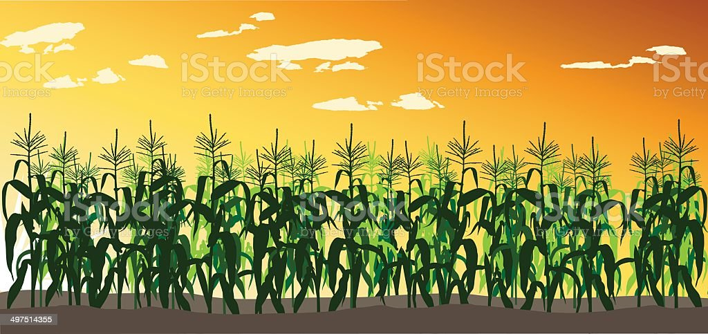 royalty free corn field clip art vector images illustrations istock rh istockphoto com Corn Field Drawing Corn Clip Art