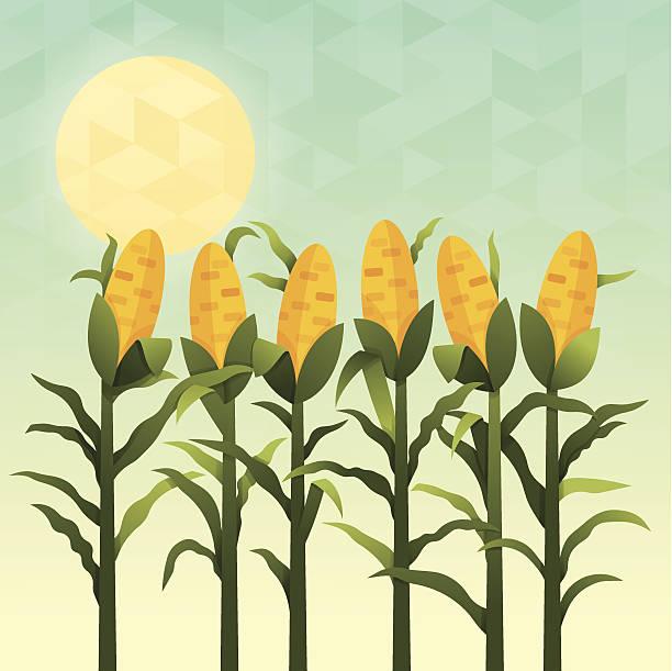 cornfield - herbstgemüseanbau stock-grafiken, -clipart, -cartoons und -symbole