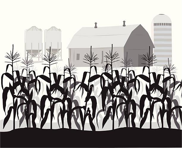 cornfield vector silhouette - corn field stock illustrations, clip art, cartoons, & icons
