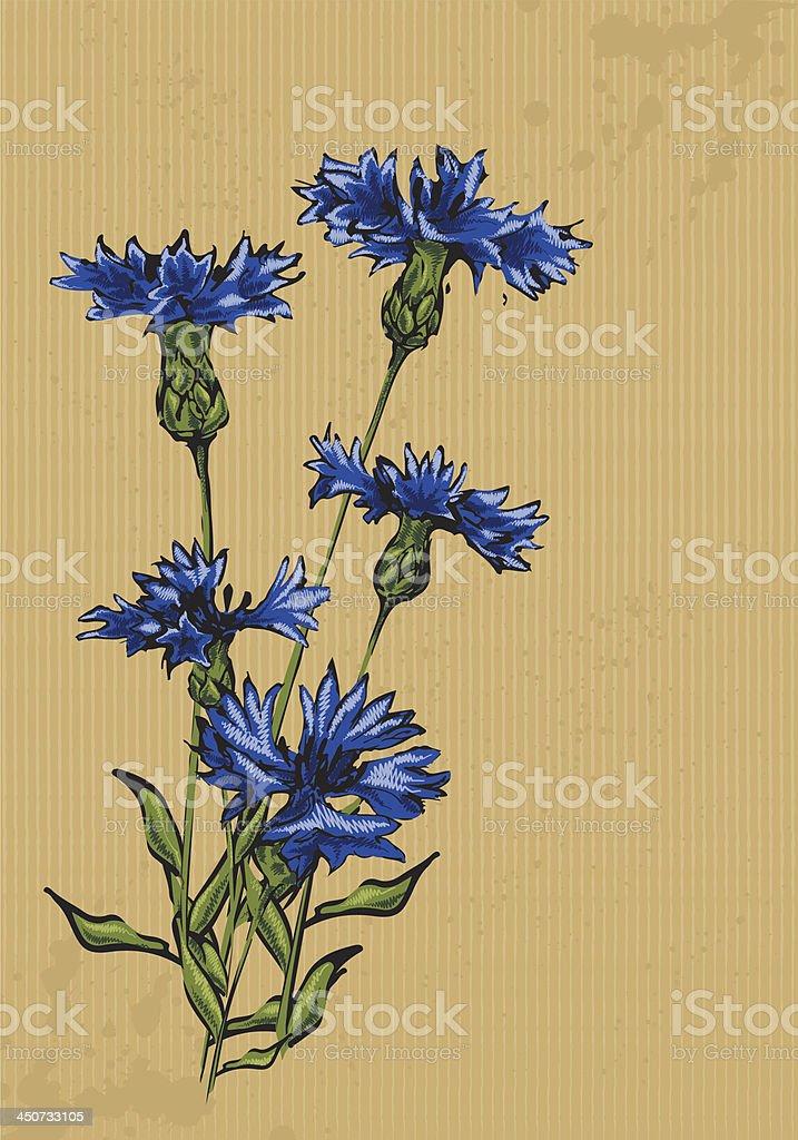 Cornflowers vector art illustration