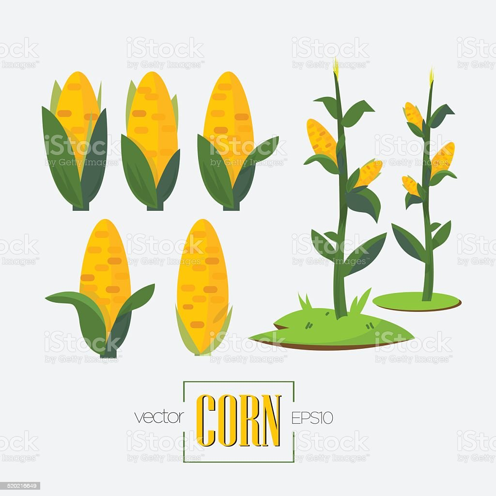 corns and corn tree - vector illustration vector art illustration