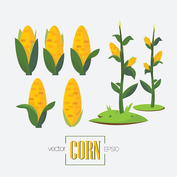 corns and corn tree - vector illustration - corn field stock illustrations, clip art, cartoons, & icons