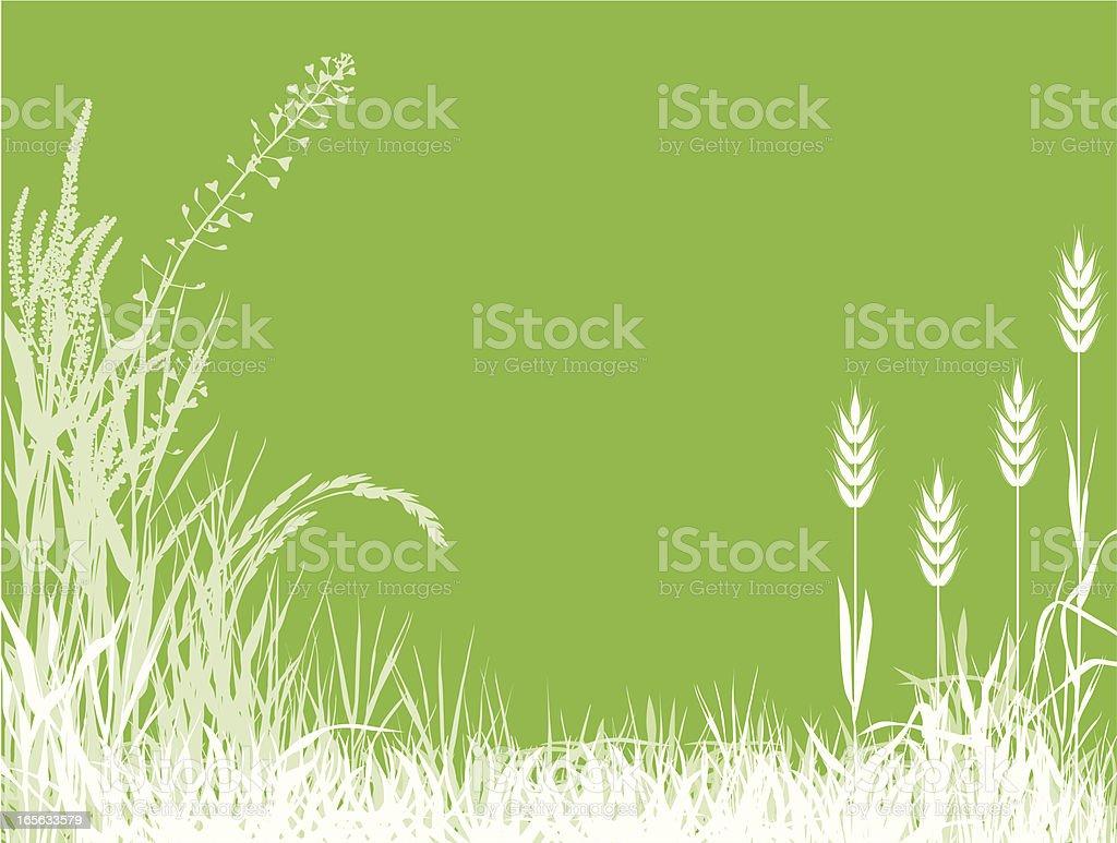 Corns vector art illustration