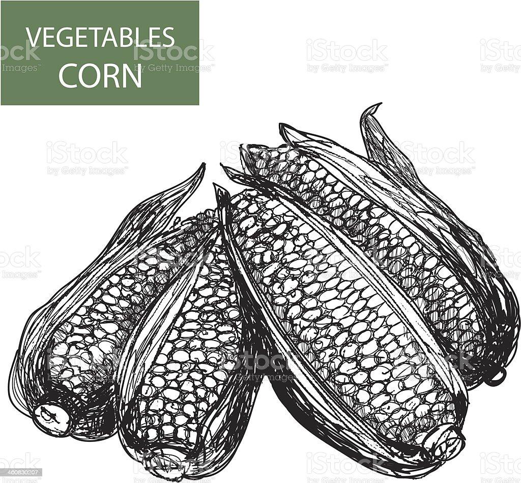 Corn-set of vector illustration royalty-free stock vector art