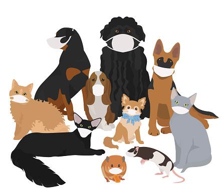Corona virus disease quarantine concept design. Pets in medical face masks from COVID-19