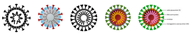 Coronavirus (covid-19 disease) drawing with structure explained, black, white and colour versions Coronavirus (covid-19 disease) drawing with structure explained, black, white and colour versions glycoprotein stock illustrations