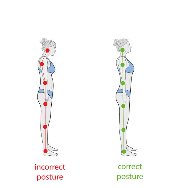 Correct alignment of human body in standing posture for good personality and healthy of spine and bone. Health care and medical illustration Correct alignment of human body in standing posture for good personality and healthy of spine and bone. Health care and medical illustration posture stock illustrations