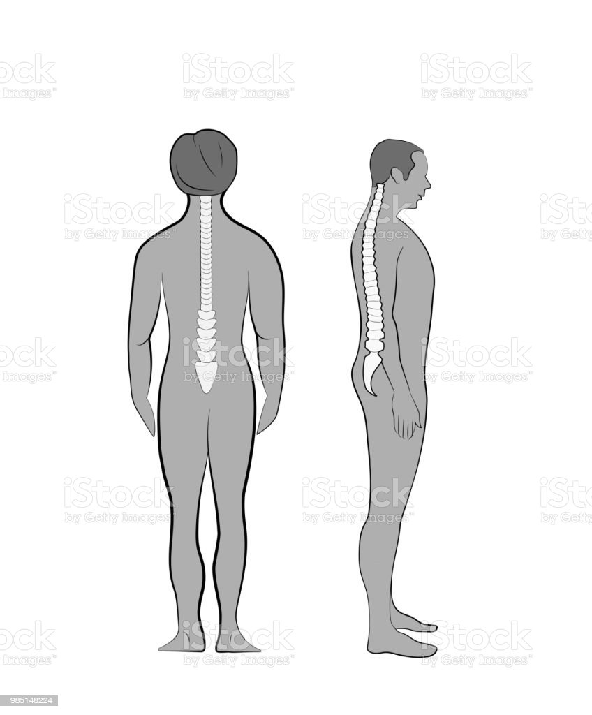 Correct Posture The Correct Position Of The Spine In A Person