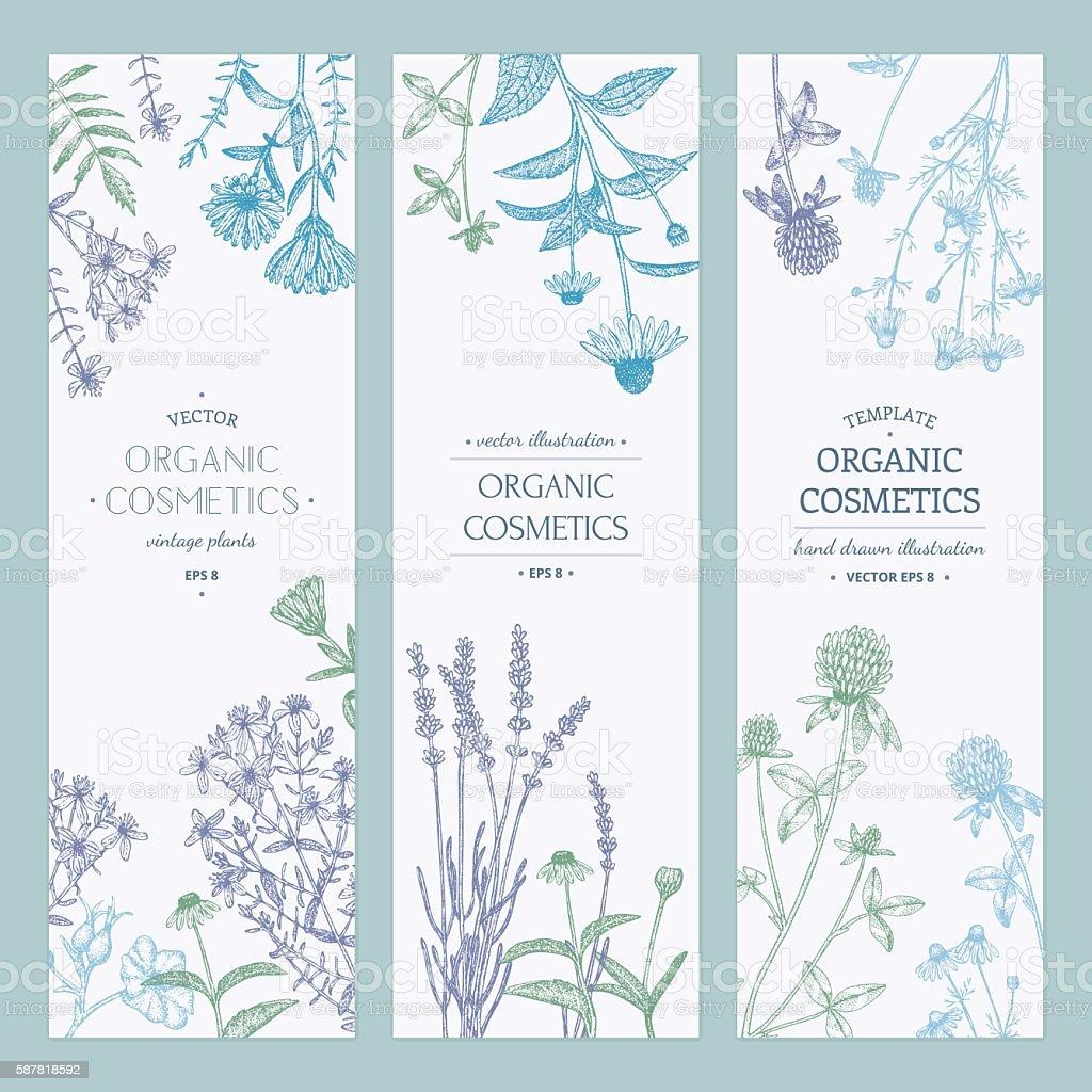Cosmetics plants. vector art illustration