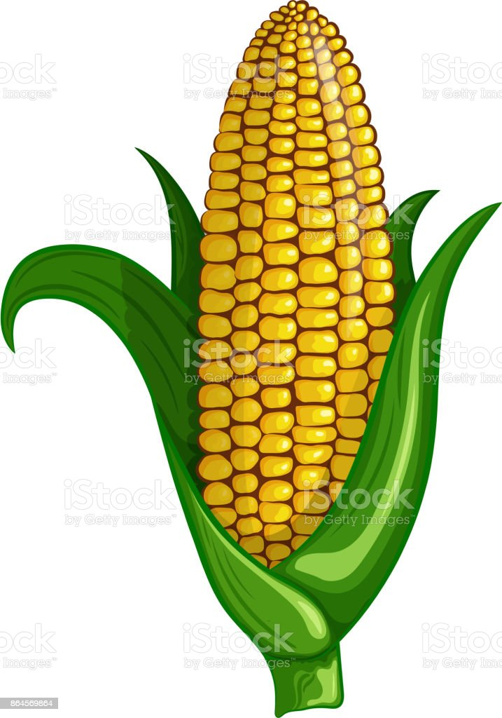 A Cot Of Delicious Sweet Corn Vector Color Illustration ...