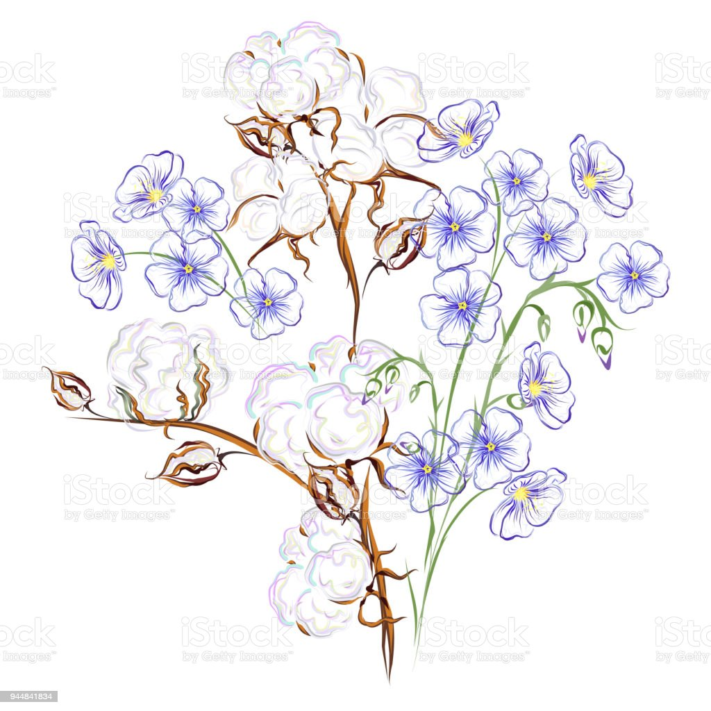 Cotton And Flax Flowers Hand Drawn Vector Illustration Stock Vector