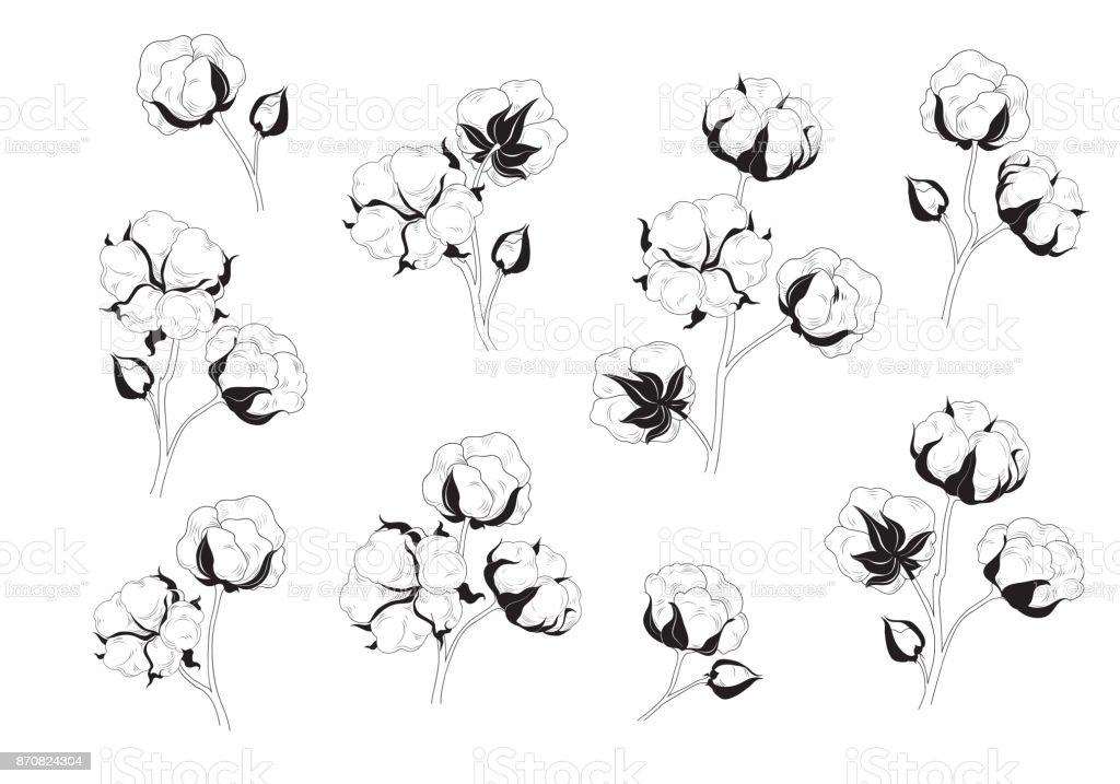Cotton flower set. Natural material floral collection. vector art illustration