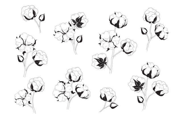cotton flower set. natural material floral collection. - cotton stock illustrations, clip art, cartoons, & icons