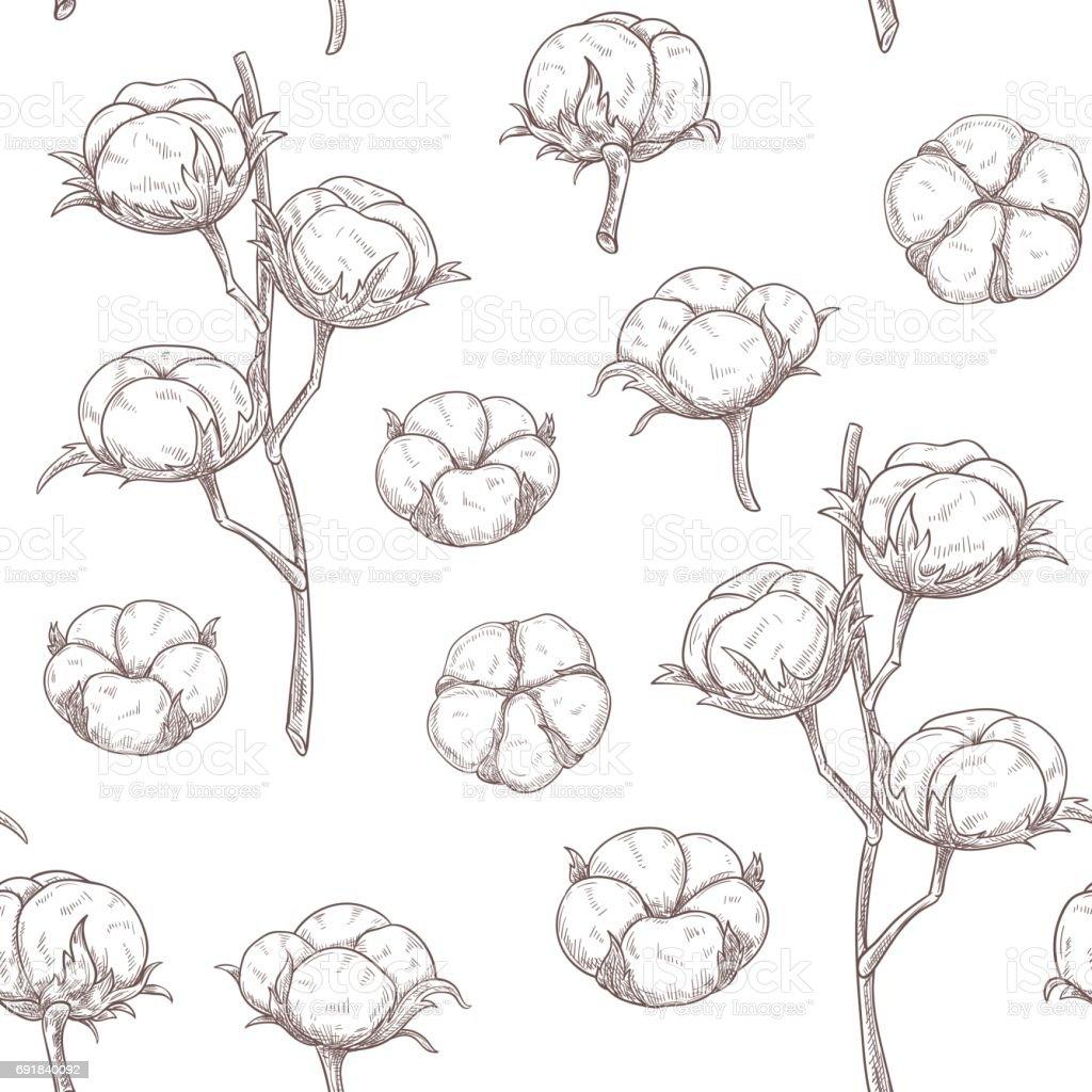 Dessin Sans Couture Fleurs De Coton Cliparts Vectoriels Et Plus D