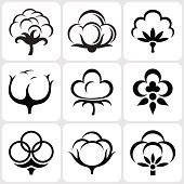cotton icon set vector illustration