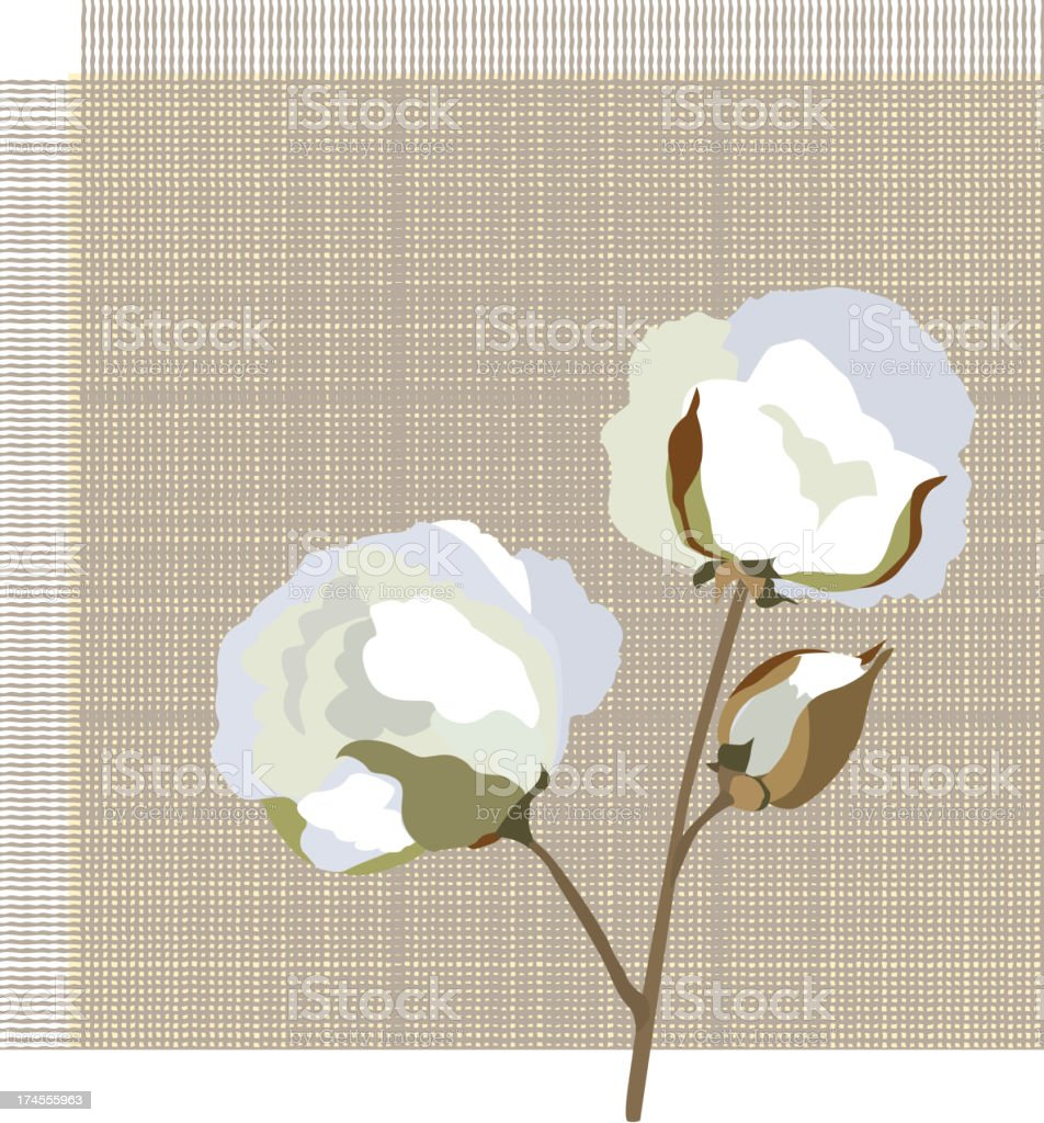 Cotton plant label vector art illustration