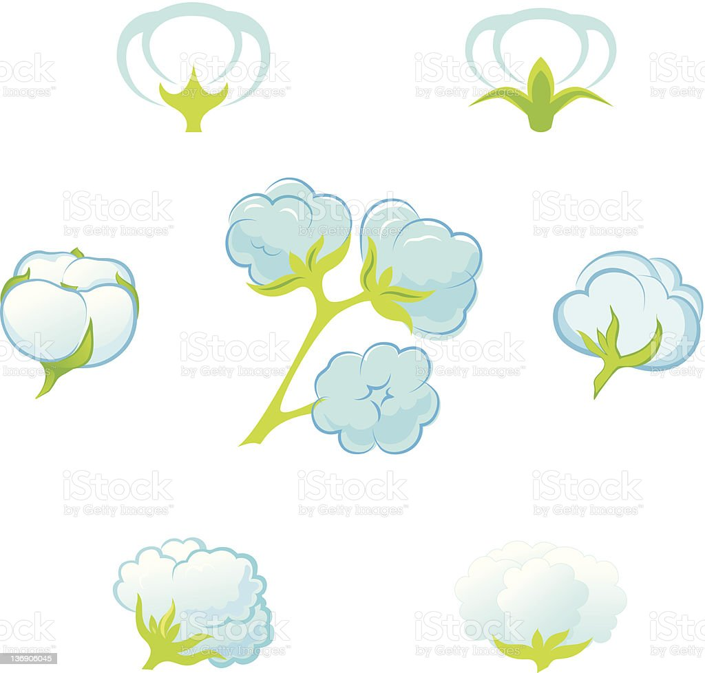 Cotton (Gossypium). royalty-free stock vector art
