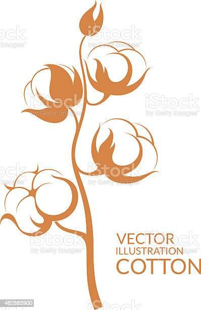 Cotton vector id482883900?b=1&k=6&m=482883900&s=612x612&h=hzlpmmk8iwsay2kdhy j2 renj4 tiydqbxv0 clwa0=