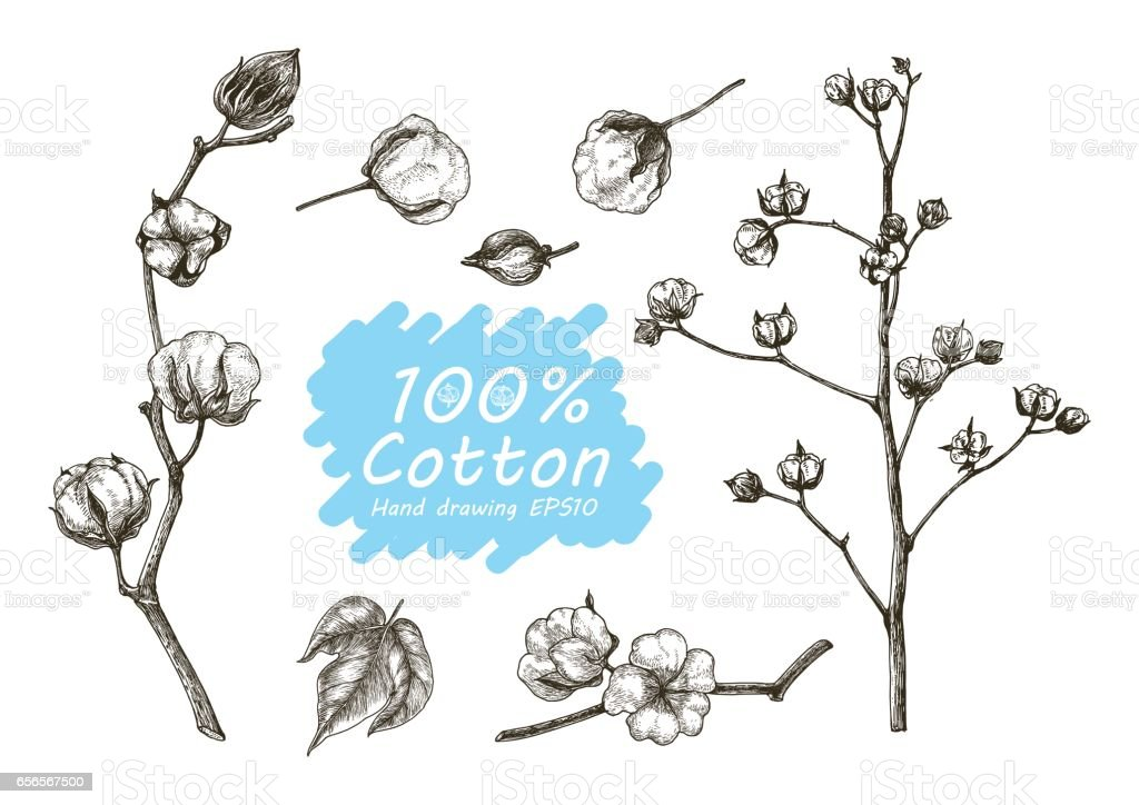 Cotton vector set hand drawing vector art illustration