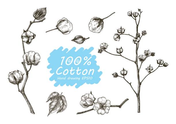 cotton vector set hand drawing - cotton stock illustrations, clip art, cartoons, & icons