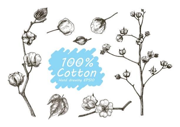 Baumwolle-Vektor legen Sie Hand-Zeichnung – Vektorgrafik