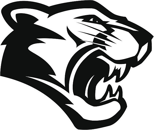 Cougar Face Line Drawing : Royalty free mountain lion clip art vector images
