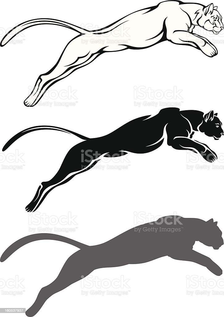 Cougar vector art illustration