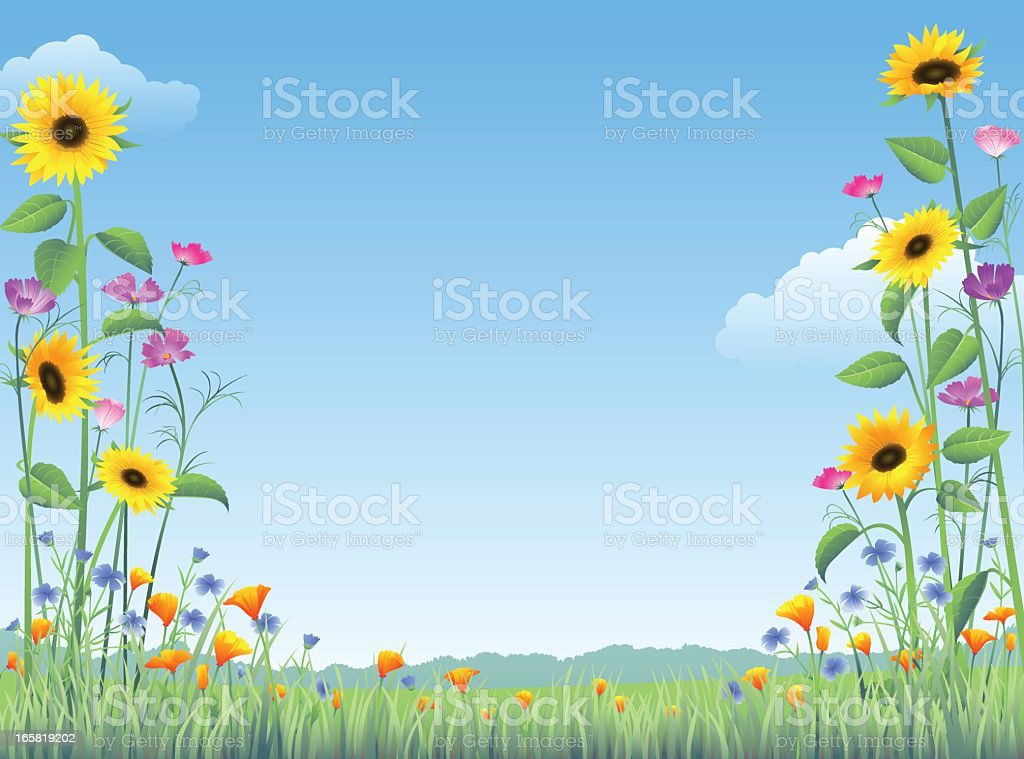 Country Wildflowers royalty-free country wildflowers stock vector art & more images of beauty in nature