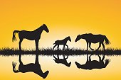Countryside family horses silhouettes in wild nature