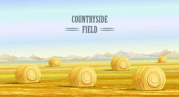 ilustraciones, imágenes clip art, dibujos animados e iconos de stock de countryside. rural area. fields with haystacks - straw field