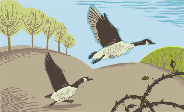 Countryside scene with Geese Countryside scene in hand crafted wood cut print style. snow goose stock illustrations