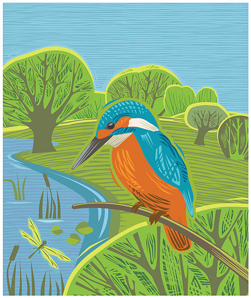 stockillustraties, clipart, cartoons en iconen met countryside scene with kingfisher - ijsvogels