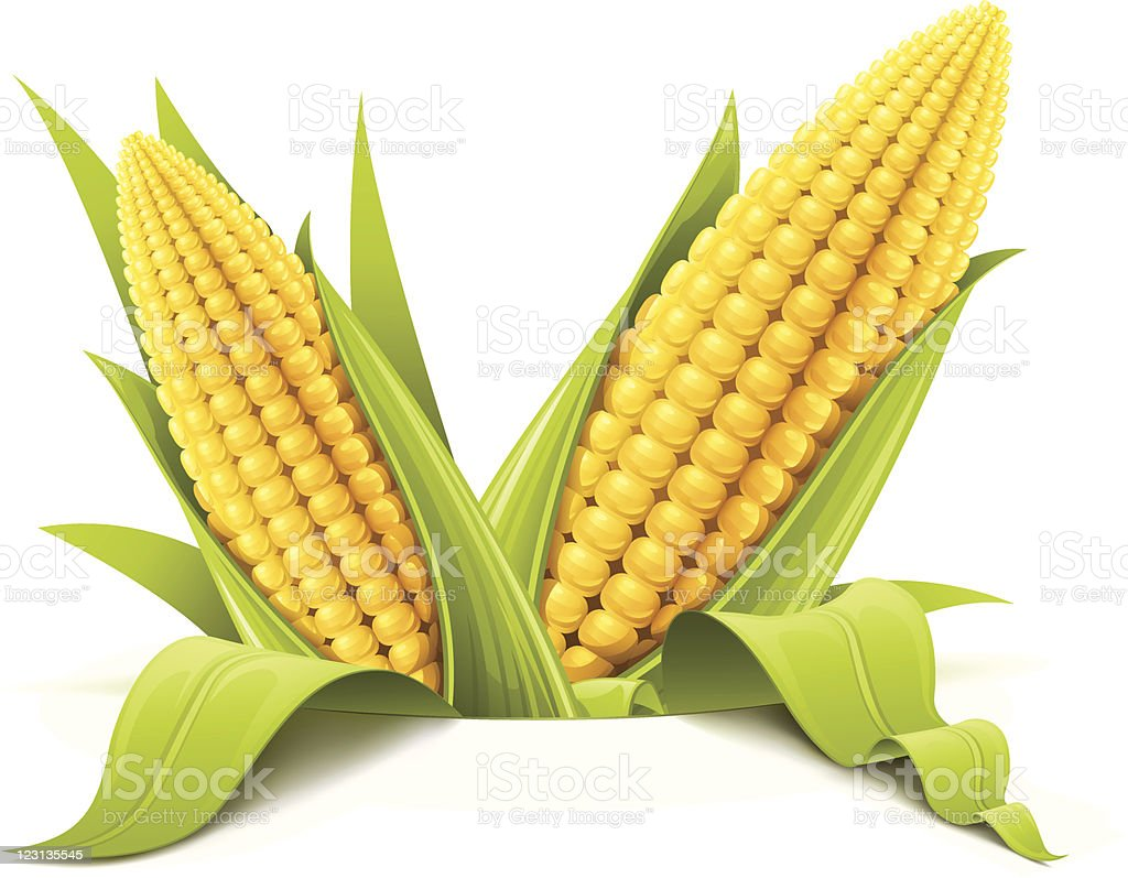 couple corncob vector art illustration