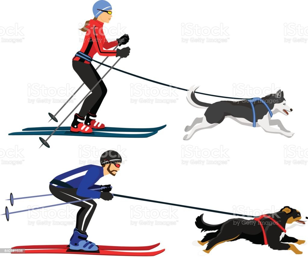 Couple, Man and Woman skijoring with their dogs vector illustration. Outdoor winter activity vector art illustration