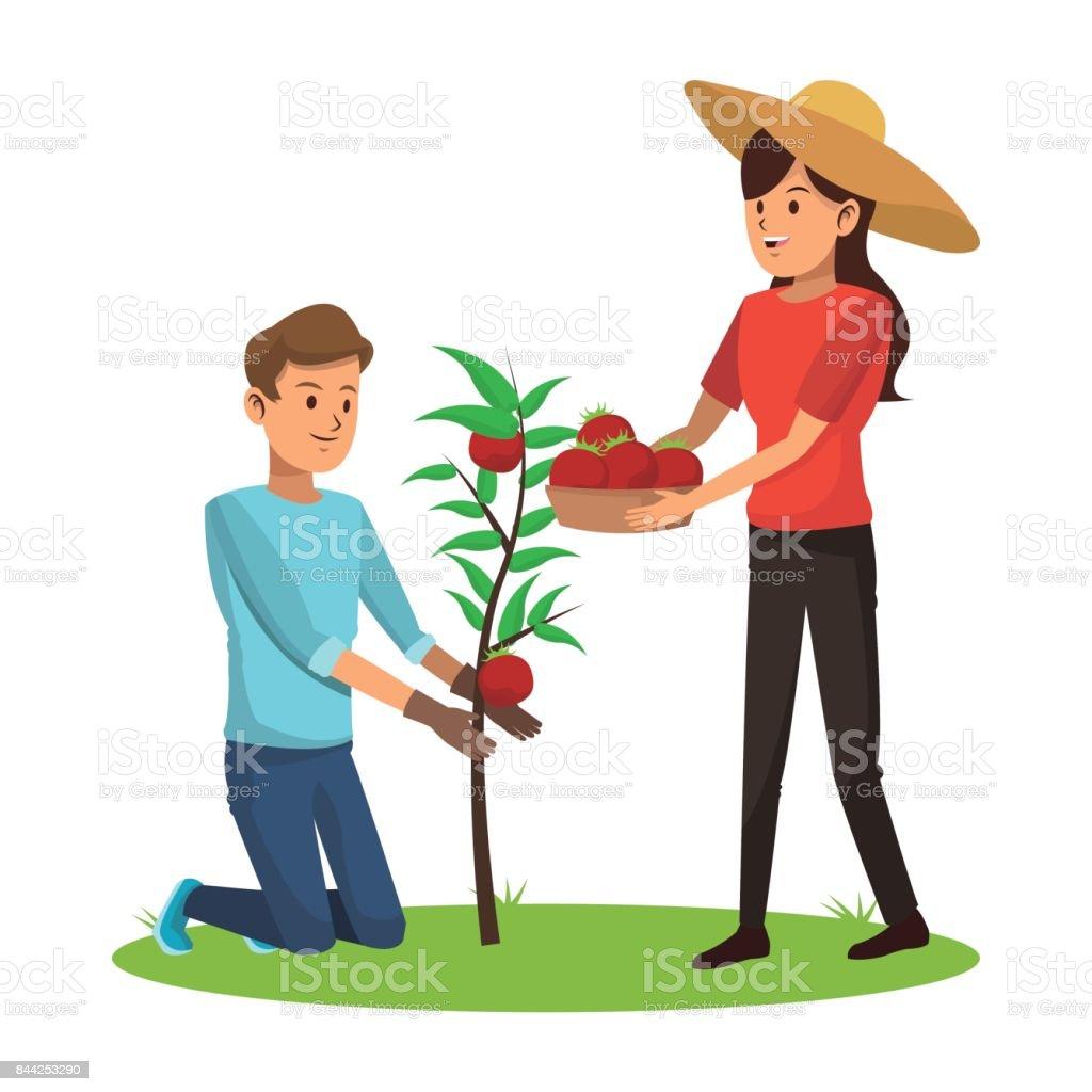 couple picked tomato tree basket vector art illustration