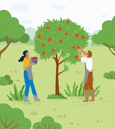 Couple Picking Apples in Garden Man and Woman