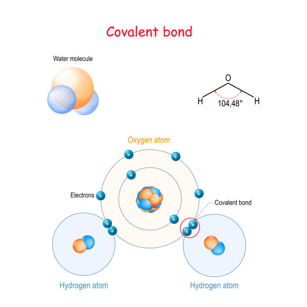 Covalent bond for example water molecule (H2O) vector art illustration