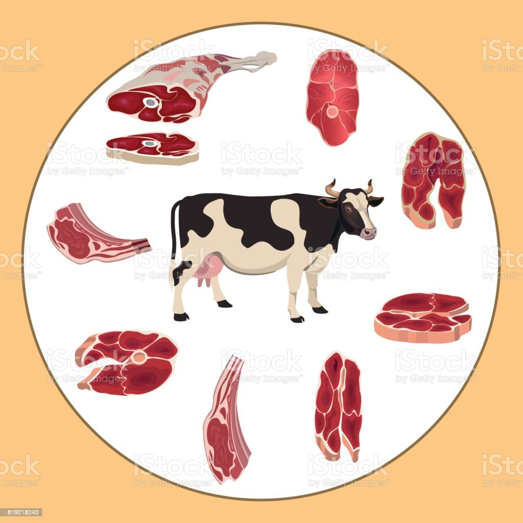 牛と牛の肉 ベクターアートイラスト