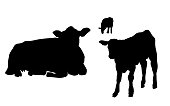 A cow and her calf in the field in silhouette illustration
