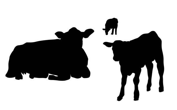 Kuh und Kalb – Vektorgrafik