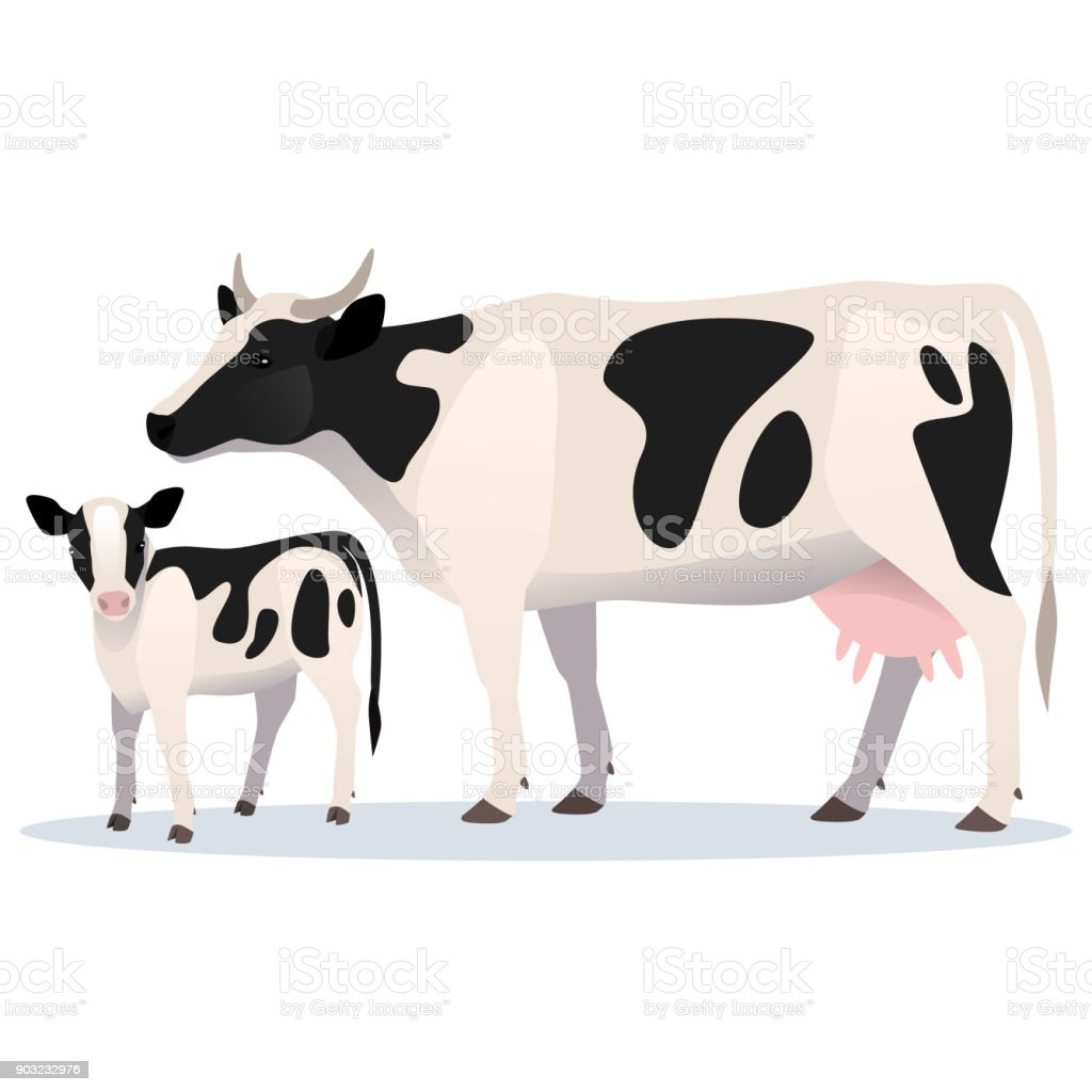 Cow and calf. Vector illustration of adult cow and her baby vector art illustration