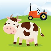 Cow and farm tractor