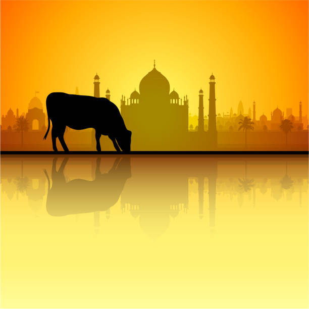 Cow and Taj Mahal (All Buildings Are Complete and Moveable) Cow and Taj Mahal. All buildings are complete and moveable. agra jama masjid mosque stock illustrations