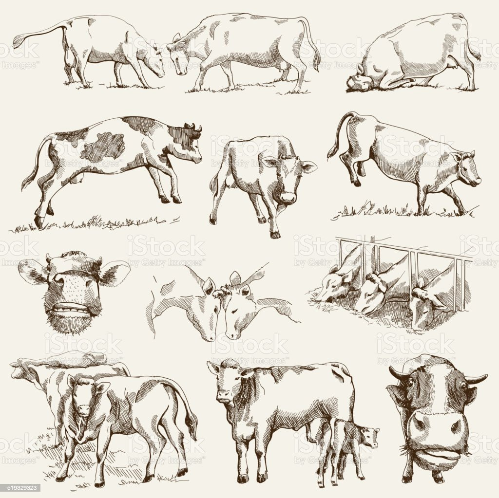 cow. animal husbandry vector art illustration