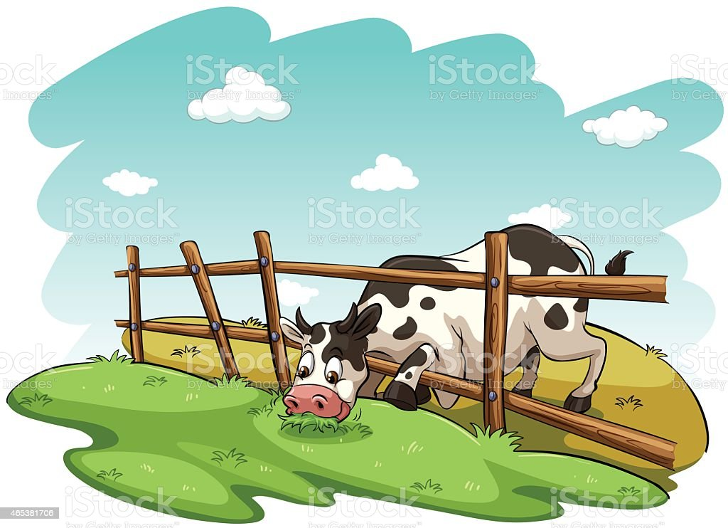 Cow at the field